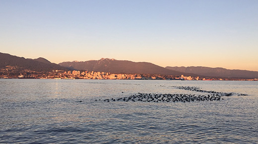Vancouver Harbour Flight Centre_Duck Ramp Story 1