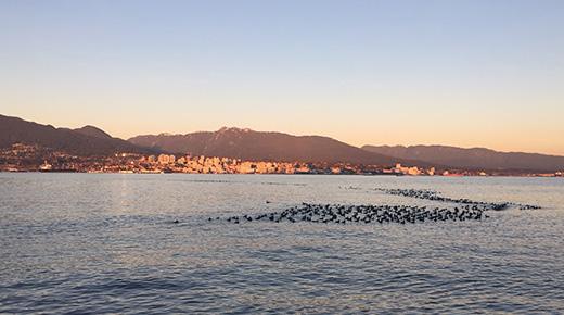 Vancouver Harbour Flight Centre_Duck Ramp Story 1